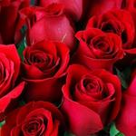 """Fryzjerstwo Profesjonalne """"La Rosa Rossa"""""""
