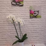Atelier Kosmetologii Paulina Olszowa