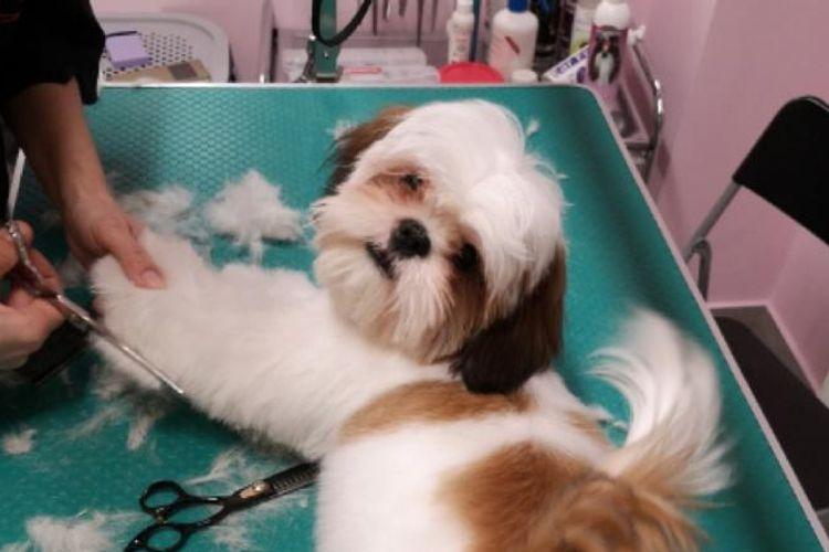 DOG&WASH salon groomerski