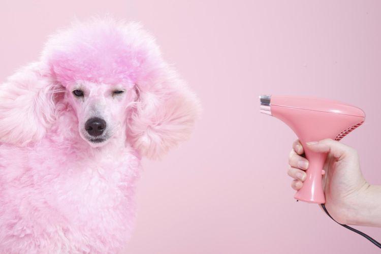 Happy Dog Warszawa- grooming&spa